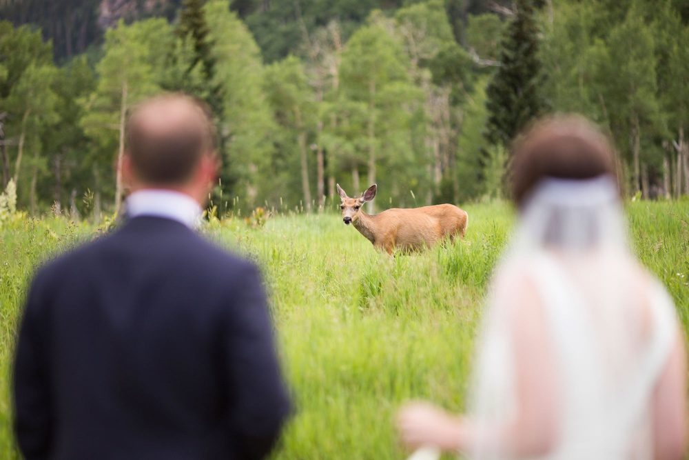 a bride and groom watch as a deer walks through the meadow at their wedding reception in Beaver Creek, Colorado.